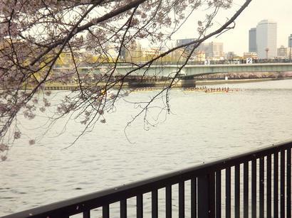 2012_0415日々0012.JPG